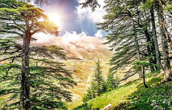 جمّال ترست بنك يرعى  المحميات الطبيعية في لبنان