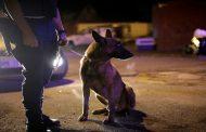 تدريب كلاب على «شم الإنتحاريين» في بريطانيا