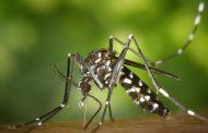 حمى الضنك تنتج مناعة ضد