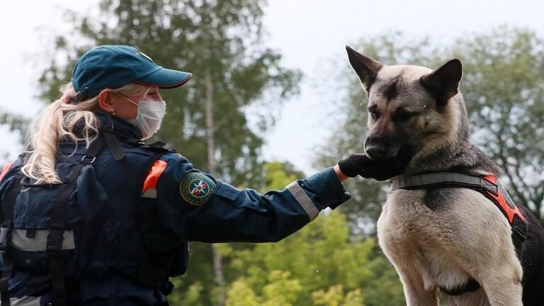 كلب بوليسي ينقذ فتاة من الاغتصاب