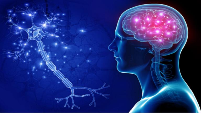 أفضل الأطعمة لتقوية الذاكرة والذكاء