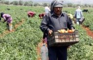 مزارعو الجنوب: كارثة زراعية ما لم ينفّذ الدعم
