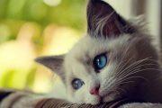 لماذا تعطس القطة … وماذا نفعل إذا تكرر الأمر؟