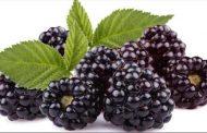 فاكهة تحرق دهون الجسم الخطرة عند تناولها بانتظام!