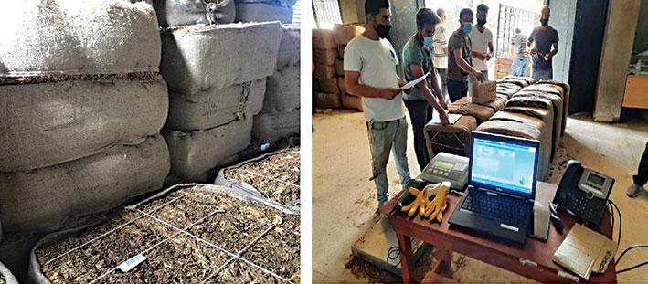 «الريجي» تستعدّ لتسلّم محصول التبغ وعيون المزارعين على رفع الأسعار